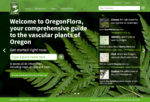 Oregon Flora home page (Matt Giraud, Creative Director, Gyroscope Creative)