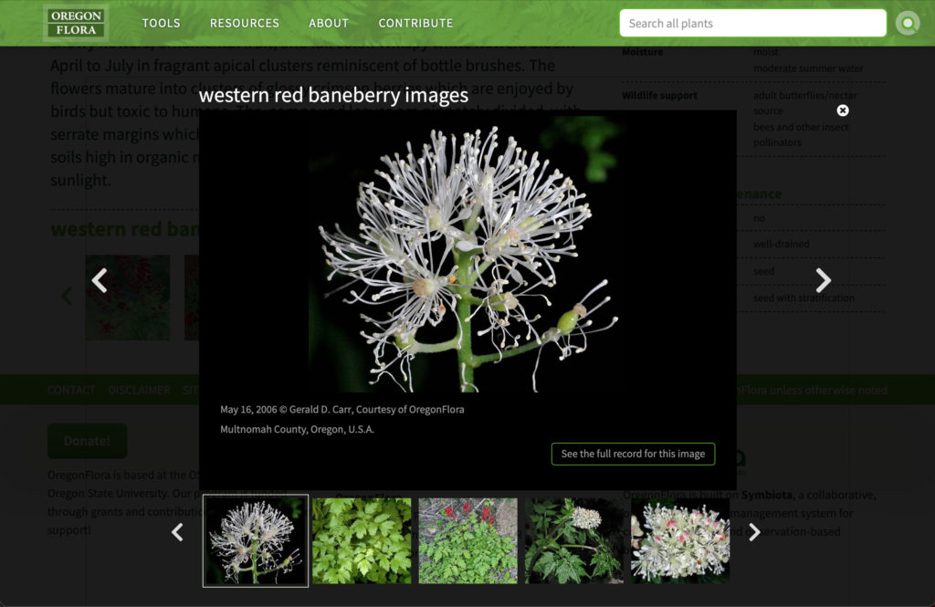 Oregon Flora Plant slideshow (Matt Giraud, Creative Director, Gyroscope Creative)